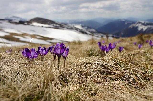 Flowers Growing on Mountaintop